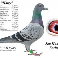 harry-นกเด่น-นกดัง-ปี-2015gaby-x-koopman