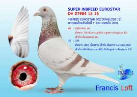SUPER INBREED EUROSTAR 802  0