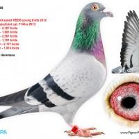 boltนกที่แพงที่สุดตัวหนึ่งของโลก-12-ล้านบาท