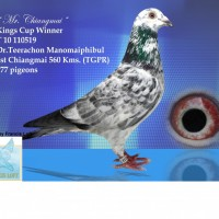 บทความนกพิราบแข่งเลี้ยงนกอย่างผู้ชนะโดย-ดร-ธีระชน-มโนมัยพิบูลย์-บท