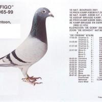figo-นกดังของโลก
